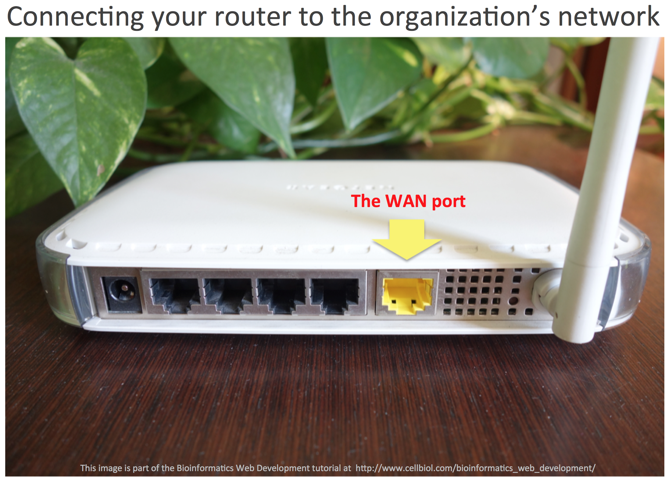 "A first step to build your own LAN within an organization is to connect your SOHO router to the organization's network.  This is done by using the WAN port of your router. Whether the IP address for this port (""external IP"") will be assigned to the router automatically or if you have to configure it yourself depends on the presence of a DHCP server within the wider network you are connecting to. If it is present, your router is belonging as a DHCP client in this context."