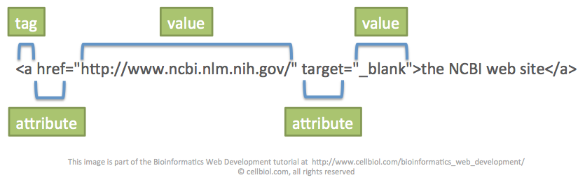 Attributes and values in the a tag