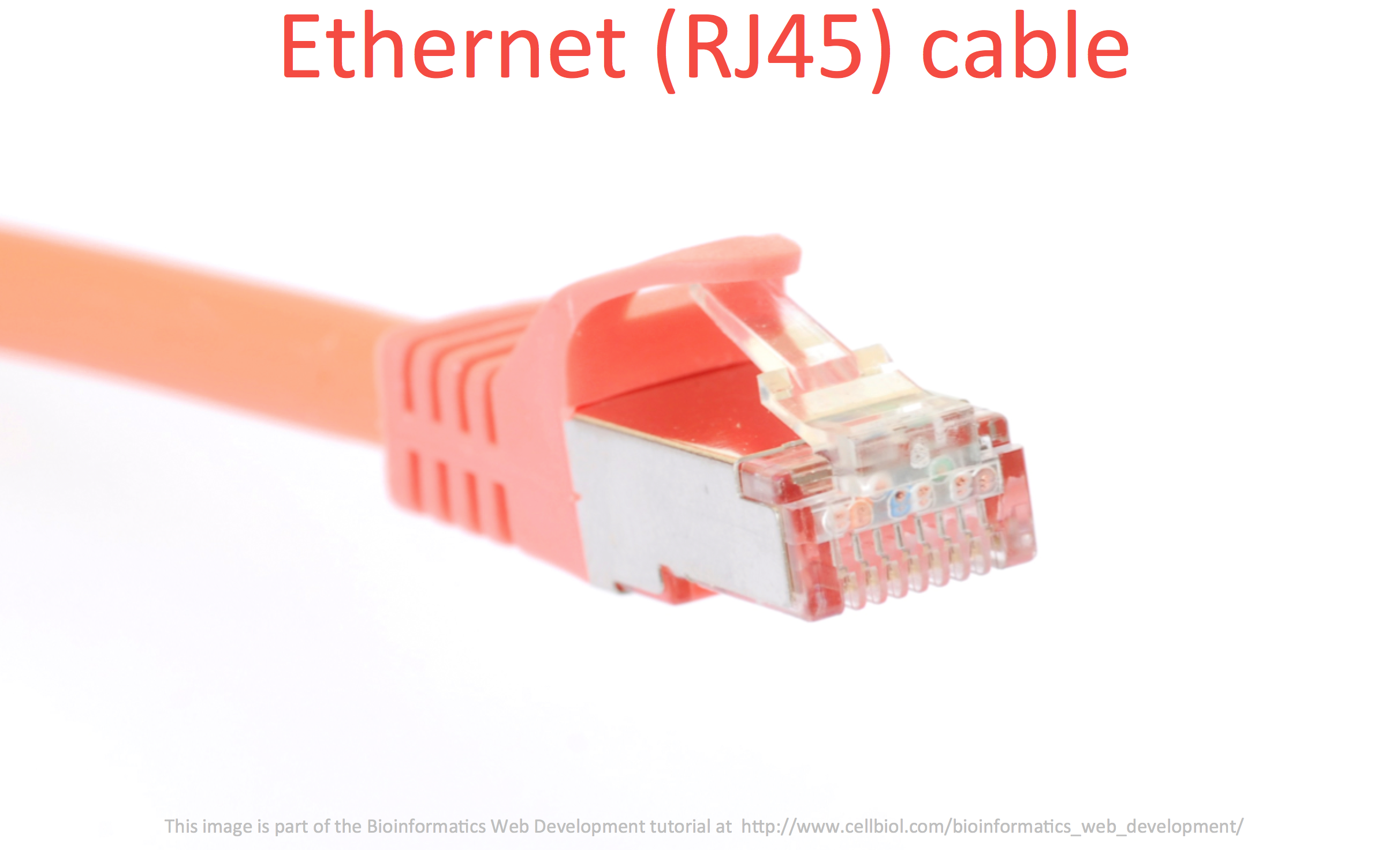 An ethernet cable. This kind of plug is known as RJ45