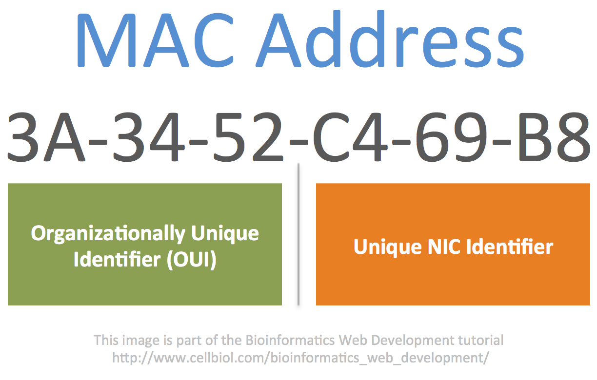 In a MAC address the first 3 octects define the manufacturer (brand) of the network card, (Organizationally Unique Identifier, OUI) while the last 3 octects are a unique identifier for the NIC