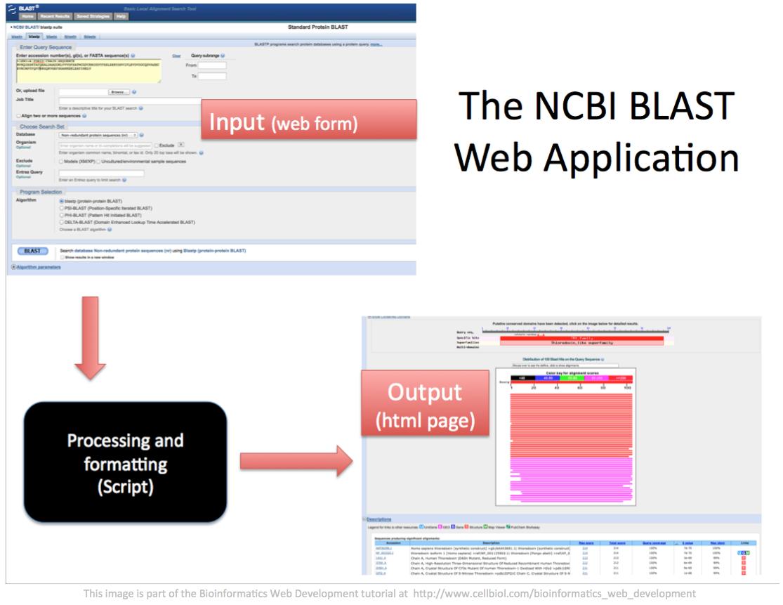 The NCBI BLAST web application