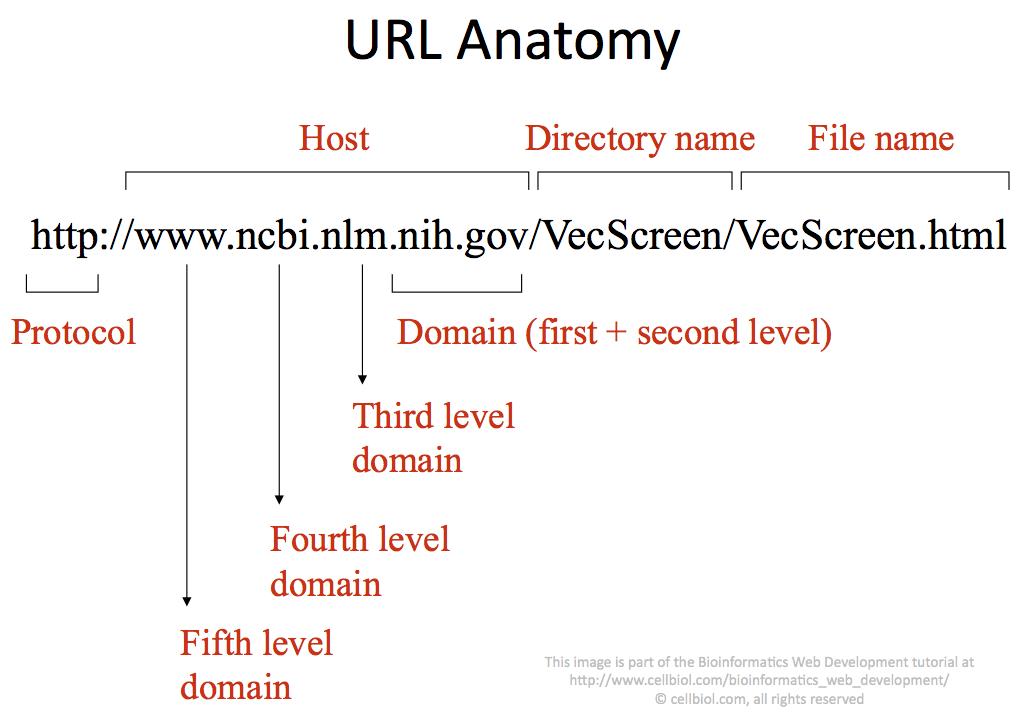 URL Anatomy