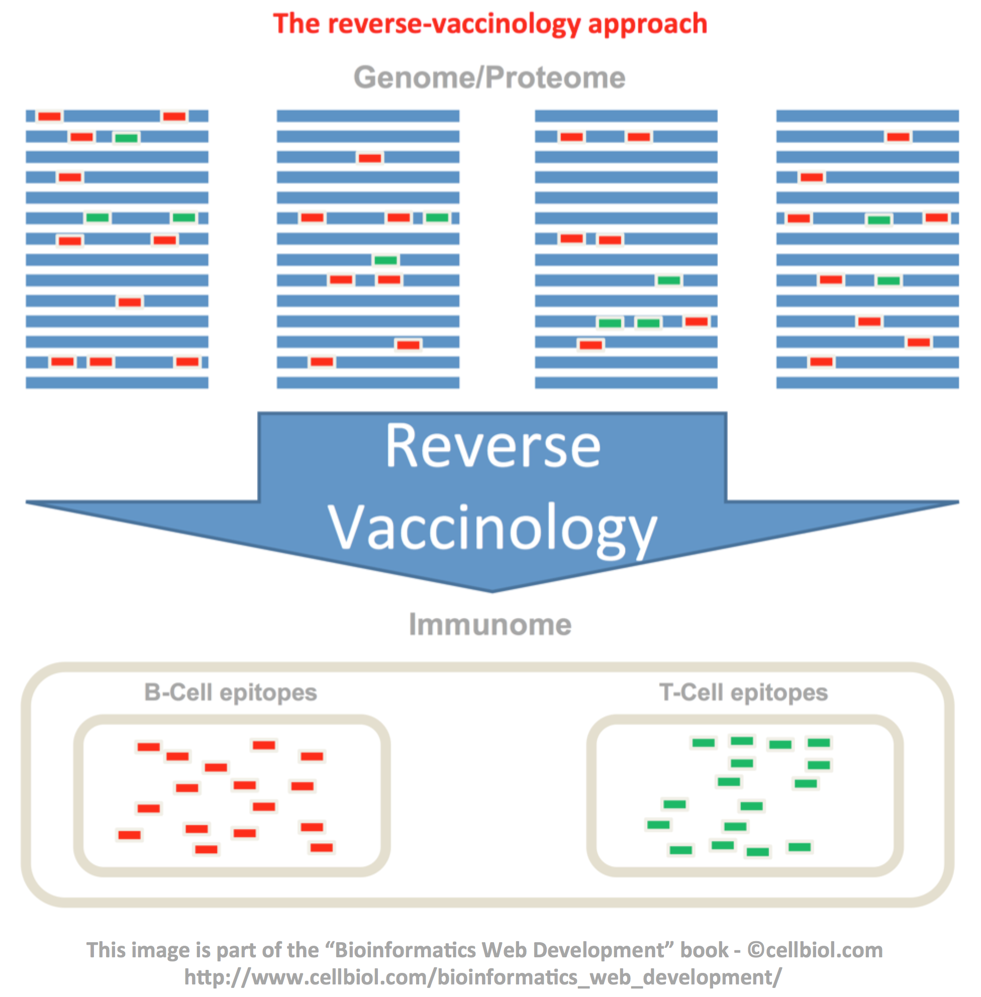 The reverse-vaccinology approach